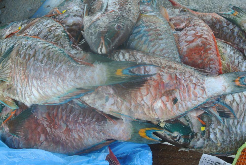 Fischmarkt auf Guadeloupe