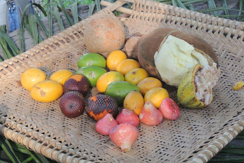 Früchte des Regenwaldes