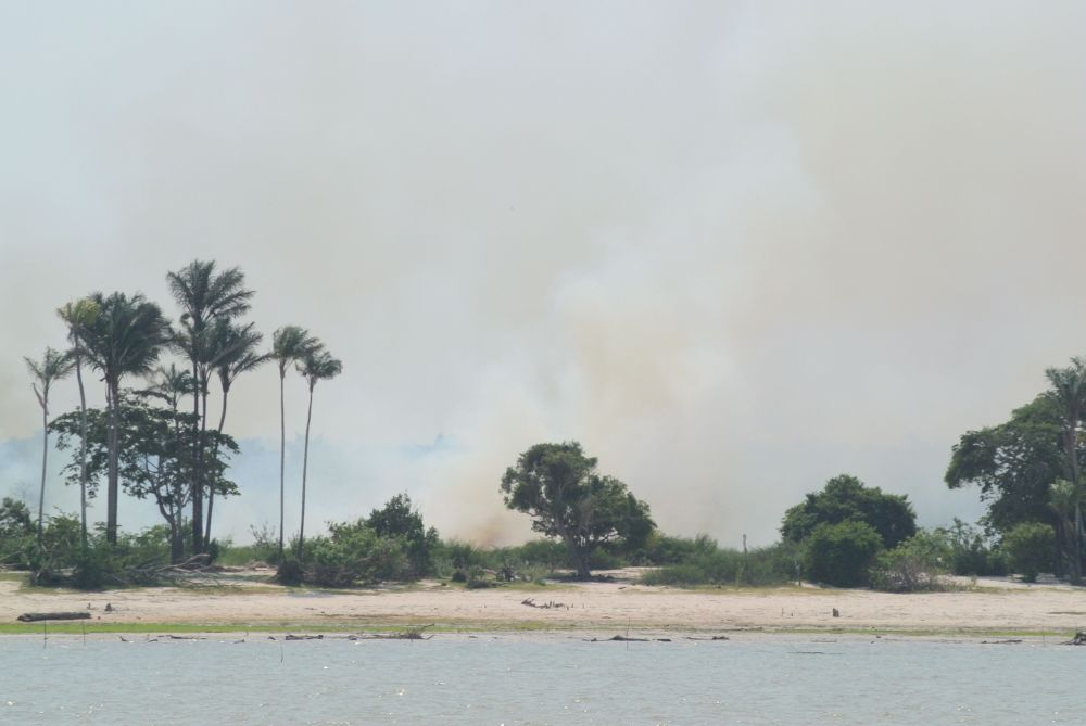 Brandrodung direkt am Amazonas