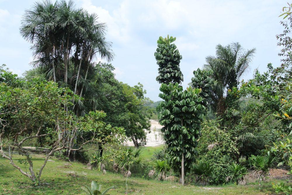 Hotelpark im Regenwald bei Manaus