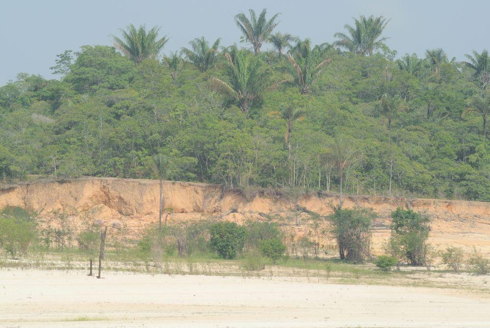 Waldstück am Seitenarm des Rio Negroe