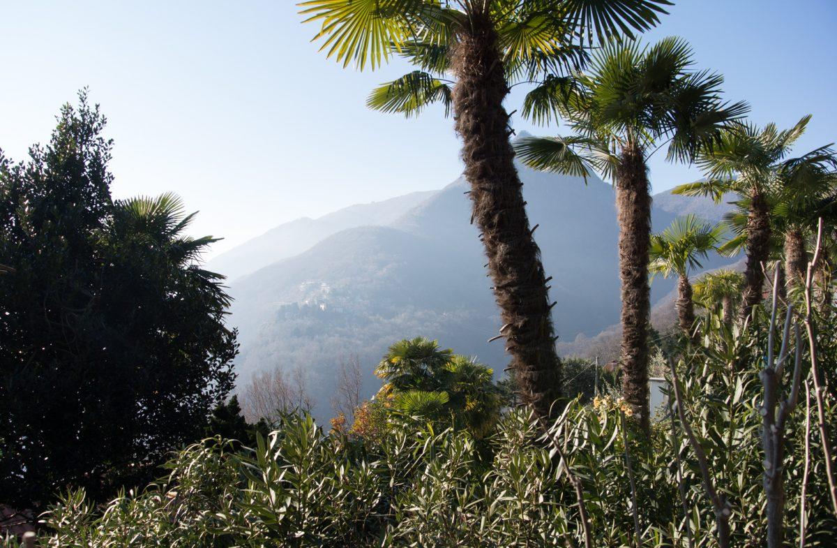 Palmen am Lago Maggiore