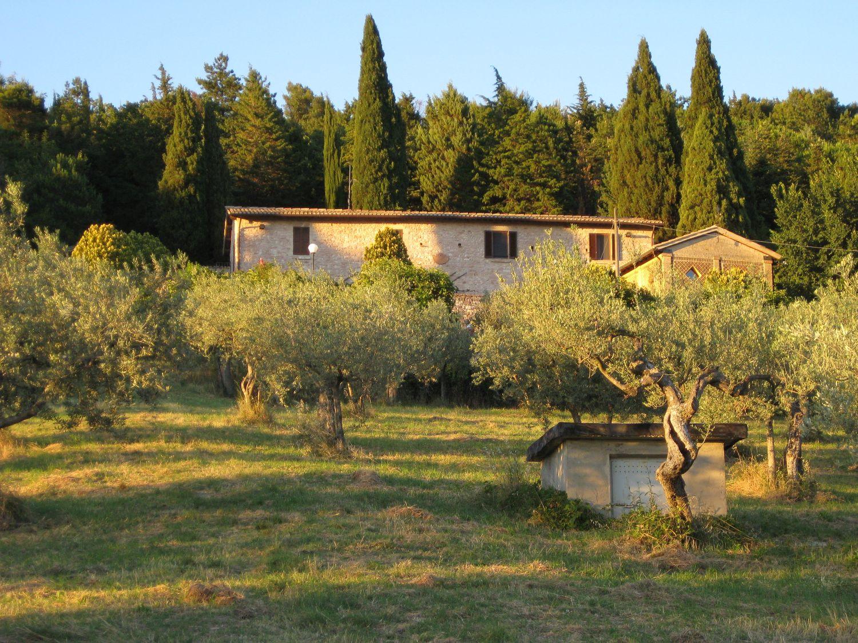 Wirtschaftsgebäude im Olivenhein