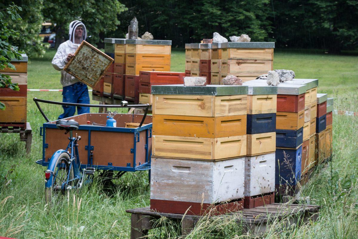 Der Stadtimker von Leipzig mit Bienenwabe