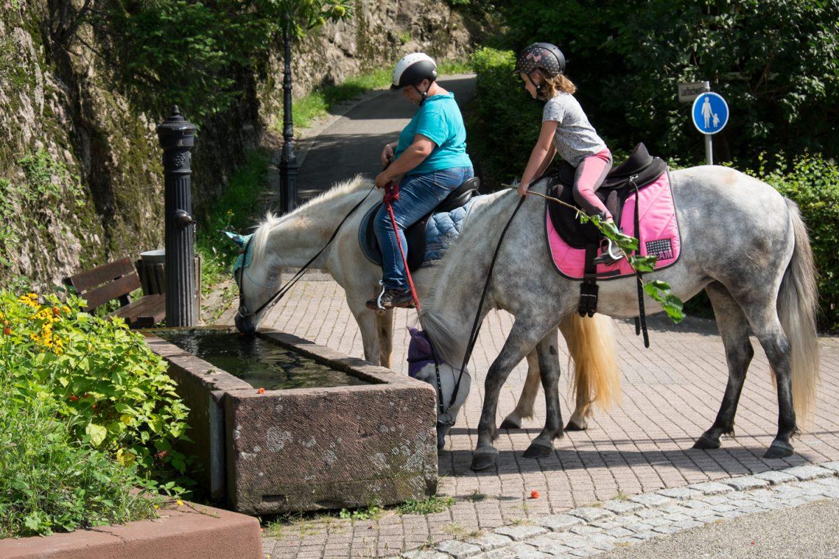Reiterinnen an der Wassertränke in Loffenau