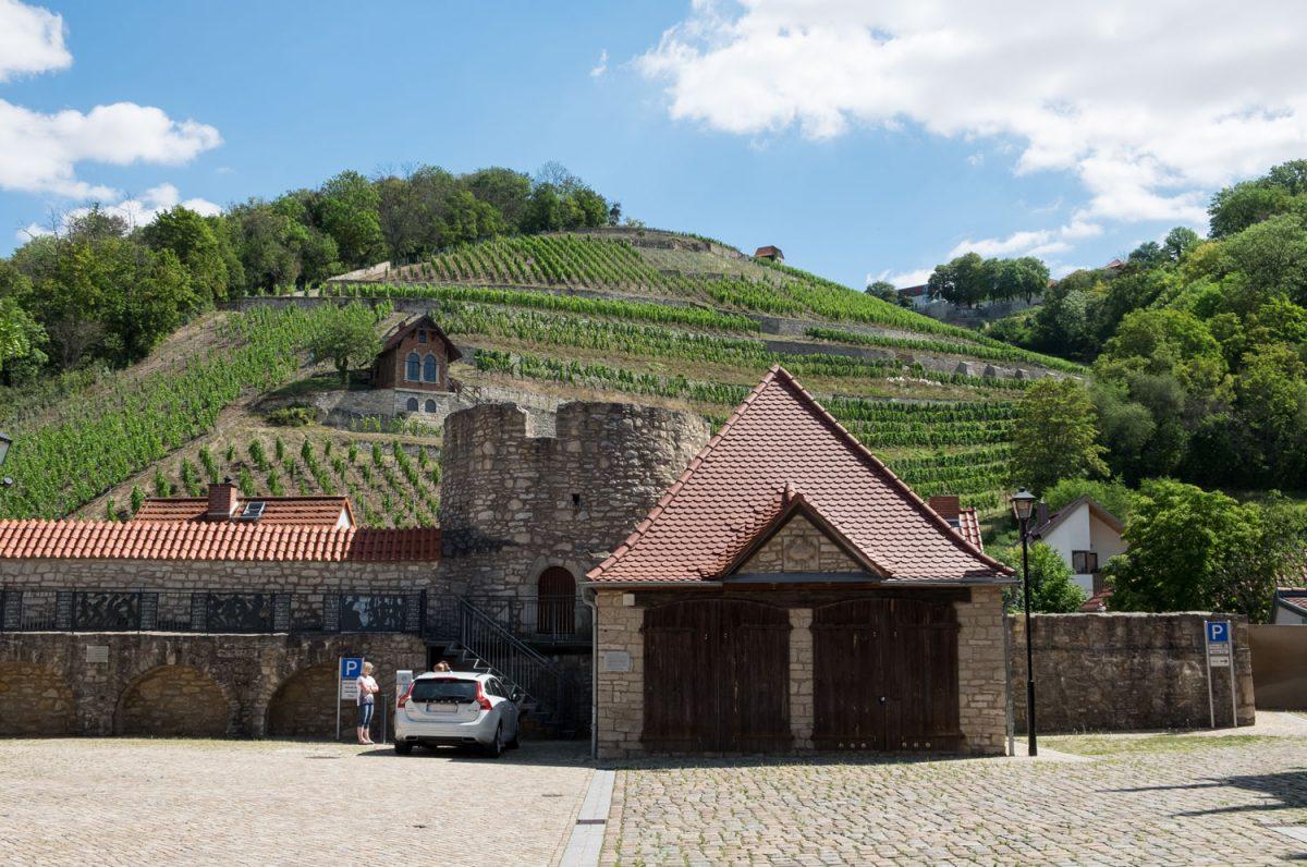 Weinberge in Freyburg